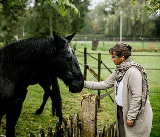 Ervaar de kracht van het paard 2